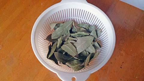 ガーデニング:枝打ちした月桂樹の葉は湯通しして乾燥させます