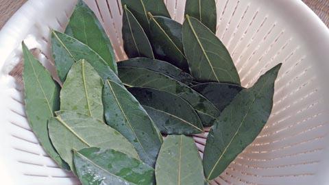 ガーデニング:枝打ちをした月桂樹は早速熱湯をくぐらせてから乾燥