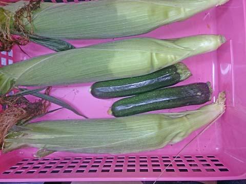 ガーデニング:家庭菜園でトウモロコシとズッキーニを収穫