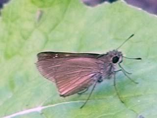 ガーデニング:実家の家庭菜園に植えた白菜の葉にとまった虫